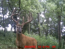 Past Trail Cam and Scouting Pics